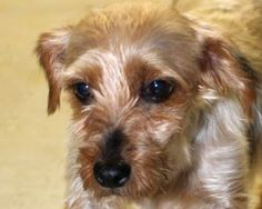 1000 Images About Dogs Urgent Adoption Foster Rescue Needed On Pinterest Adoption Shelters