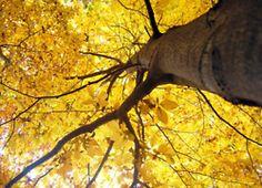 stunningsurroundings:    below yellow by palinta