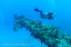 Tony and a coral encrusted mast on the Giannis D wreck, Sha'ab Abu Nuhas, Egypt's Red Sea Red Sea Diving, Egypt, To Go, Abs, Coral, World, Abdominal Muscles, Ab Workouts, Ab Exercises