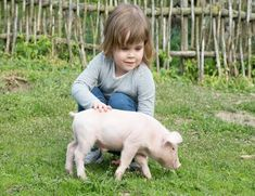 Find White Piglet Girls Hands Smiling stock images in HD and millions of other royalty-free stock photos, illustrations and vectors in the Shutterstock collection. Thousands of new, high-quality pictures added every day. Animals For Kids, Farm Animals, Strange Tales, Girls Hand, Little Pigs, Lamb, Photo Editing, Royalty Free Stock Photos, Illustration