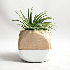 Cube Planter in White - Unique Modern Furniture - Dot & Bo