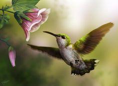 Imagen bonita de un colibri para fondo de pantalla
