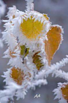 talvi tuli _by Aili A.