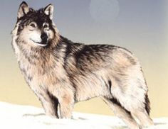 Native American Zodiac Animal:  Wolf