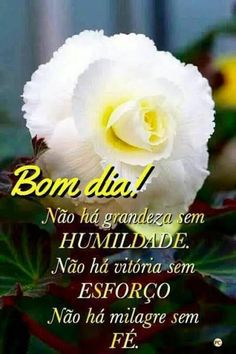 Good Morning, Rose, Gifs, Maria Jose, Suzy, Coaching, Facebook, Night, Wallpaper
