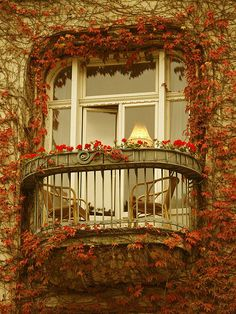 Window into Autumn (leaves,changing color,leafy,architecture)