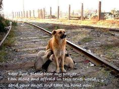 Abandoned - This breaks my heart!!!