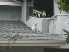 What the dog is waiting for?