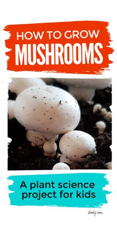 Learn how to grow mushrooms in this cool plant science project for kids. It's a brilliant kids activity and plant lifecycle experiment for kids from preschool to high school that lets kids explore plant biology and the botany of fungi Science Experiments For Preschoolers, Preschool Science Activities, Science Projects For Kids, Science For Kids, Activities For Kids, Chemistry Experiments, Summer Science, Primary Science, Science Chemistry