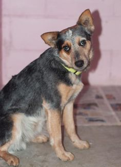 #DogsInDanger JOEY will be killed unless someone steps up to save him. Gain a Buddy, Save a Life. Adopt Joey now!