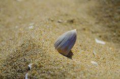 Title  Shell On The Beach   Artist  Adam Budziarek   Medium  Photograph