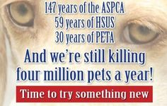 Maybe closing down all breeders? Just sayin'. Animal Help, Animal Fur, Stop Animal Cruelty, Animal Welfare, Peta, Animal Rights, Exotic Pets, I Love Dogs, How Are You Feeling