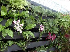 Plantio de orquídeas, asplenios no Jardim vertical em execução, Sabe aquela parede ou muro sem graça? Dá para fazer um jardim vertical e cobrir de vegetação! Acompanhe no Blog Jardim de Helena