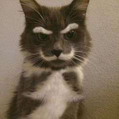 13 Cats Who May Or May Not Be Plotting To Kill You