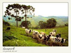 Gaupore, Rio Grande do sul
