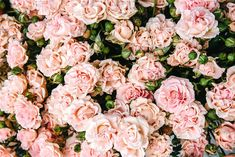 Light pink roses by Farique on Beautiful pink roses picture to use for Canva graphics