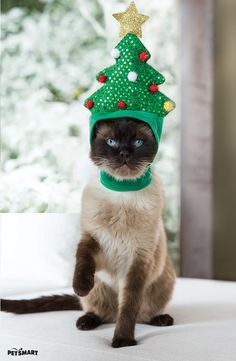 Rockin' under the Christmas tree. Keep your cat involved in the holidays this year with our tree hat! I Love Cats, Cute Cats, Funny Cats, Animals And Pets, Funny Animals, Cute Animals, Party Animals, Christmas Animals, Christmas Cats