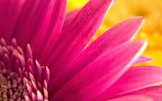 picture of Pink Flower Widescreen ~ HD Pictures
