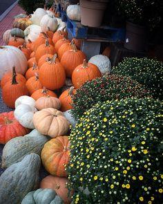 Autumn Autumn#coffee#adventure#travel#sailing#science#explore#hiking#nature#photo#health#food#foodie#eat#autumn