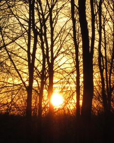 The forest's belly button? Belly Button, Trees, Celestial, Sunset, Outdoor, Navel, Outdoors, Tree Structure, Sunsets