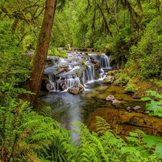 Sweet Creek Falls - Oregon - USA Oregon Usa, Oregon Coast, Usa Wallpaper, Background Images Wallpapers, Travel Bugs, Relaxing Music, Piano Music, National Forest, Nature Photography