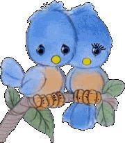 Animação de casal de passarinhos azul