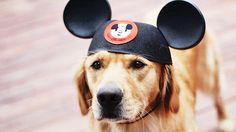 Mickey's Ears - Pesquisa Google