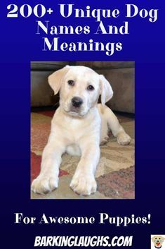 200 Unique Dog Names And Meanings For Awesome Puppies Dog Names Boy Dog Names Unique Puppies Names Female