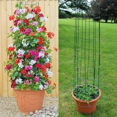 Amazing Vertical Garden Ideas about Climbing Plants in Pots # Amusements # Amazi… – Garten ideen Container Flowers, Container Plants, Container Gardening, Diy Garden, Garden Projects, Garden Plants, House Plants, Fence Plants, Diy Projects