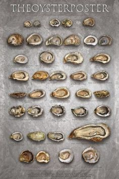 The Oyster Poster Print by Marinelli at Art.com: