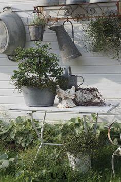 Pin af gitte shahin på have inspiration / garden inspiration сад, старые ок Garden Cottage, Garden Pots, Home And Garden, Rustic Gardens, Outdoor Gardens, Deco Champetre, Olive Garden, Garden Inspiration, Garden Furniture