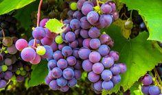 Mascarilla de uva para las arrugas - Trucos de belleza caseros