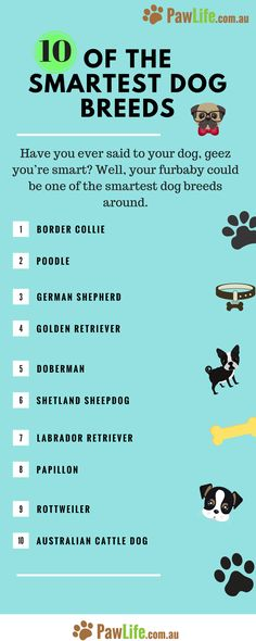 10 of the Smartest Dog Breeds: Is your Dog on the List? – Paw Life Have you ever said to your dog, geez you're smart? Well, your furbaby could be one of the smartest dog breeds around. Smartest Dog Breeds, Best Dog Breeds, Puppy Breeds, Best Dogs, Smart Dogs Breeds, Dog Breeds List Of, Dog Breeds Chart, Dog Information, Dog Facts
