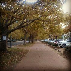 Stellenbosch in Autumn :) Rest Of The World, Sidewalk, Country Roads, Autumn, Instagram, Side Walkway, Fall, Sidewalks, Pavement