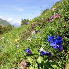 Guten Morgen  #dnx #intirol #motivation #austria #mountain #openmyworld #goplayoutside #greatnorthcollective #wildernessculture #letsgosomewhere #ourplanetdaily #wildlifeplanet #stayandwander #campvibes #lonelyplanet #themountainiscalling #mindthemountains #explorewildly #bergheil #finditliveit #adventuremobile #northwestisbest #exploremore  #travelstoke #wonderful_places #liveauthentic #livethelittlethings #WorldTravelIG #weroamaustria #hochhinaus2019