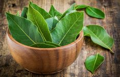Amazing bay leaf benefits abound in healing oils and teas. Bay is a 'salt buster' herb. Add bay for flavoring, use less salt. Growing Herbs At Home, Best Herbs To Grow, Bay Leaf Benefits, Wasp Repellent, Fresh Bay Leaves, Bay Leaves Uses, Sage Plant, Types Of Herbs, Laurus Nobilis