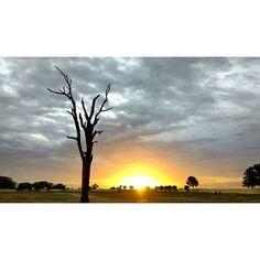 Reposting @aathith_alfa: Sun set.... #shotonmoto  @motorolain  @bikers._club . . #bikers_club #tripersclub #evening #sunset #tree #abandoned #climate #motofoto #cloudy #blackcloud #nature #photography #photographer #traveller #travelblogger #biker