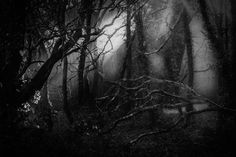 The picture of the mysterious wood in black and white - more moody than a moody thing on moody day