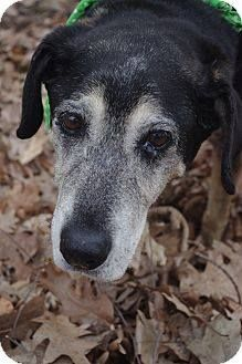 Presley-Hound Mix Mahoning County Dog Pound Youngstown, OH- Senior! Please cross post him for, rescue/a forever home  - ♥~ RS Presley is a sweet and gentle senior hound mix brought in as a stray. This old guy is already neutered and appears to be housetrained. A very sweet older dog. Available: April 4 http://www.adoptapet.com/pet/10551460-poland-ohio-hound-unknown-type-mix  The Mahoning County Dog Pound  589 Industrial Rd. Youngstown, OH 44509 (330) 740-2205 x1. Click photo to go to FB…