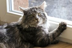 Cats are just like us in many ways. They also experience the advancement of age in their own unique way. Your kitty may have spent most of her life with you through thick and thin, but as the years progress, your cat may not be as agile as before. Cats are adept at hiding any […] The post Common Health Issues of Older Cats appeared first on The Catington Post. Types Of Tumors, Living With Cats, Cat Ages, Thyroid Hormone, Thyroid Problems, Animal Facts, Thick And Thin, Maine Coon Cats, Veterinary Medicine