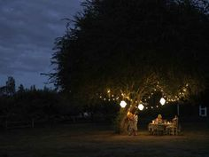 Light up your yard with string lights: