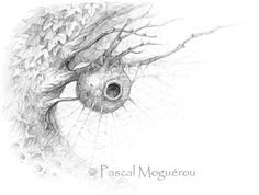 Le noir et blanc de Pascal Moguérou