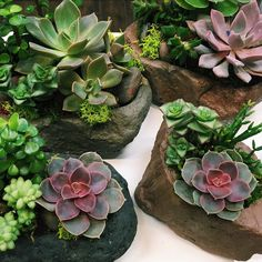 fabulous vancouver florist ALOE there!  It SUCCS not having plants in your life (get it? Succulent jokes!), so come and check out our fresh new shipment of succulent rock gardens! Also, don't forget about our #prettylittlegiveaway2016 ! #prettythingsvan #prettythings #florist #vancouver #succulent #succulents #echeveria #cactus #cacti #succulove #flowerstagram #garden #planter #plants #aloevera #cute #fun by @prettythingsvan  #vancouverflorist #vancouverflorist #vancouverwedding...