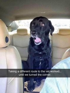 Funny Animal Memes Of The Day 25 Pics - Funny Dog Quotes - Funny Animal Memes Of The Day 25 Pics Funny Animals Daily LOL Pics The post Funny Animal Memes Of The Day 25 Pics appeared first on Gag Dad. Funny Animal Jokes, Funny Dog Memes, Cute Funny Animals, Funny Relatable Memes, Funny Animal Pictures, Cute Baby Animals, Cat Memes, Dog Pictures, Funny Images