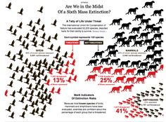 (1 of 2) Are We in the Midst of a Sixth Mass Extinction?  A Tally of Life Under Threat. The International Union for Conservation of Nature has evaluated 52,205 species, depicted here, for their ability to survive. Each symbol represents 100 species assessed (red is threatened, black is not threatened):  13% of birds assessed are threatened. 25% of mammals assessed are threatened. 41% of amphibians assessed are threatened.