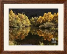 California, Sierra Nevada, Autumn Aspen Trees Reflecting in Rush Creek Photographic Print by Christopher Talbot Frank at Art.com