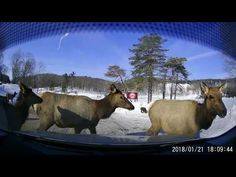 Winter visit at Omega Park Canada Tours, Wildlife Park, Day Tours, Omega, Winter, Youtube, Animals, Winter Time, Animales