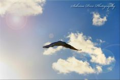 Flying High - Photo taken by Me.  Sabrina Perri