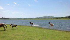 Lago Los Molinos - Soys Inmobiliaria
