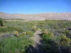 Sand Pit Trail, between Medano Pass Road/Sand Ramp Trail and the dunes